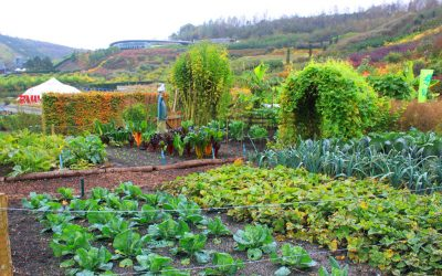 4 Tips For Starting a Fall Garden